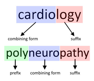 Medical terminology glossary