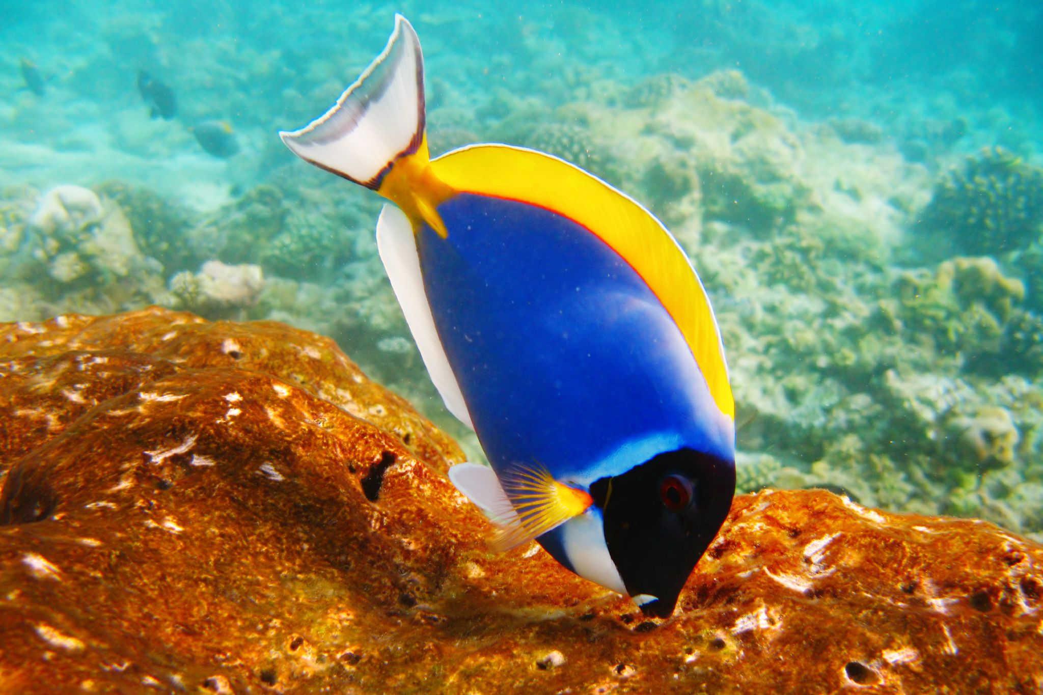 god has created fish