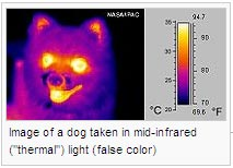 "Image of a dog taken in mid-infrared (""thermal"") light (false color)"
